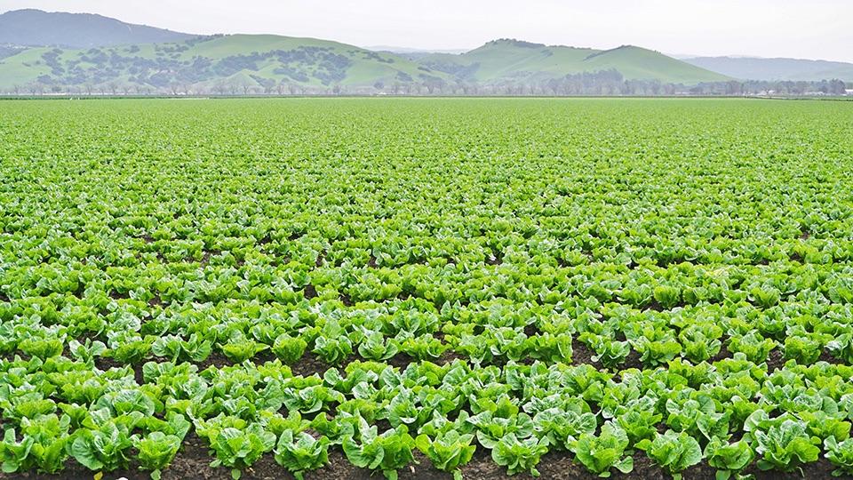 Agricultural/Rural